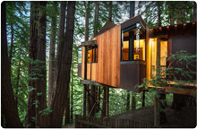 Exterior view of a Tree House